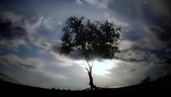 Fantasy Tree Landscape Stock Footage