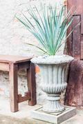Green plant decorate in garden Stock Photos