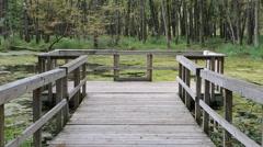 Wood Swamp Pond Boardwalk - stock footage