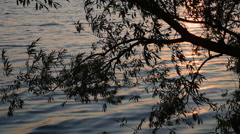 Willow Tree Wind and Waves Sun Stock Footage