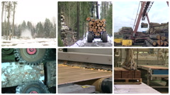Timber and lumber industry. Montage of video clips collage. Stock Footage
