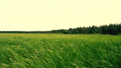 Wind over natural grass field Stock Footage