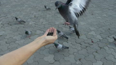 Two doves eating from the hands 100fps Stock Footage