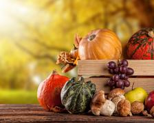 Fall fruit and vegetables on wood. Thanksgiving concept Stock Photos