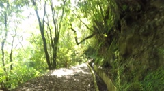 Walking in nature near a Levada. Madeira Stock Footage