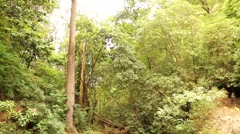 Forest on Madeira Stock Footage