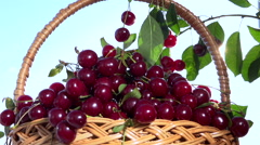 Ripe, juicy cherries fall down into a basket on sky background. Stock Footage