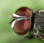 fly. close - stock photo