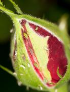 aphids on the plant. close - stock photo