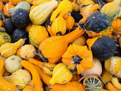 Bright orange gourds and squashes - stock photo