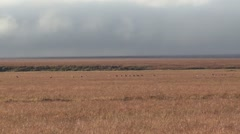 Tundra Grassland Windy Day in Arctic Sandhill Crane Flock Stock Footage