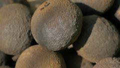 Black walnut raw pieces 4K 2160p UHD video - Organic black walnut 44 3840X216 Stock Footage