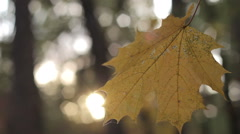 Autumn leaves on the wind  blur forest background Stock Footage