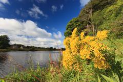 Beautiful Flower and Scene of River Dee - Aberdeenshire Aberdeen Scotland, UK Stock Photos
