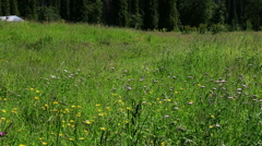 meadow in Ili River Valley - stock footage