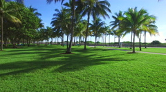 Aerial elevation through the palms Stock Footage