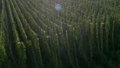 Aerial - Rising above the hop field Stock Footage