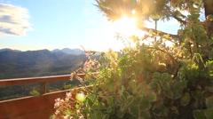 Small flower petals in intensive sun light Stock Footage