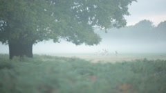 Young deer in the fog Stock Footage