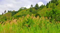 Long grass by lake Toba. 4K resolution - stock footage