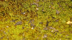 Moss on the wall Stock Footage