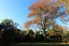 Autumn Scene, Garden - stock photo