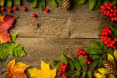 Rowan with leaves  and  cones on wooden boards Stock Photos