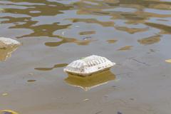 Styrofoam floating on water, Hazardous waste, Background of ecological harm. - stock photo