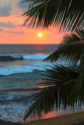 Beautiful sea sunset and palm leaves Stock Photos