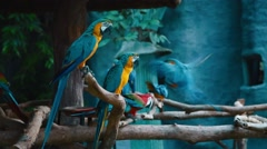 Blue and red parrots Stock Footage