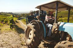 Vineyard worker transporting grapes to wine factory Stock Photos
