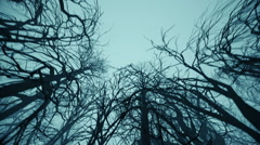 Mystic Misty Forest Bottom View - stock footage