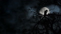 Creepy crow sitting on a tree branch during full moon night 4K Full HD - stock footage