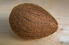 Large whole coconut with hairy surface - stock photo