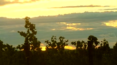 Sunset on the Vineyard French Stock Footage