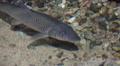 Close Up Of Fish In Aquarium 03 Footage