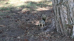 Squirrel Sitting In Shade Of Tree Trunk Stock Footage