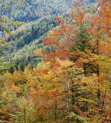 Deciduous forest in autumn colors Stock Photos