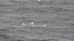 Slow motion four sea birds flying over a rough ocean coast Stock Footage