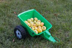 Harvest of organic apples in a green toy trailer - stock photo