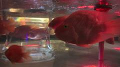 Close Up Of Fish In Fancy Aquarium Stock Footage
