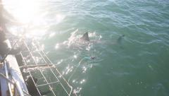 Great white shark cage diving view from aboard boat - stock footage