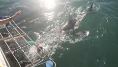 Great white shark cage diving view from aboard boat Stock Footage