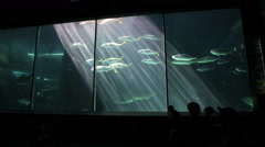 People watching fish swimming past at Two Oceans Aquarium Stock Footage