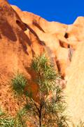 Stock Photo of Uluru Rock and Flora Detail