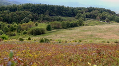 Wildflowers in a field on a mountainside. Stock Footage