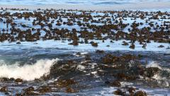 Waves washing over kelp forest in the Altantic ocean Stock Footage