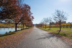Yarra Valley Winery in Autumn - stock photo