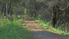 Forest trail on Kraljevica park in Eastern Seriban city of Zajecar 4K 2160p  Stock Footage