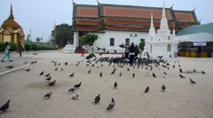 Thai people feeding food for pigeon birds at Wat Phra Mahathat Woramahawihan Stock Footage